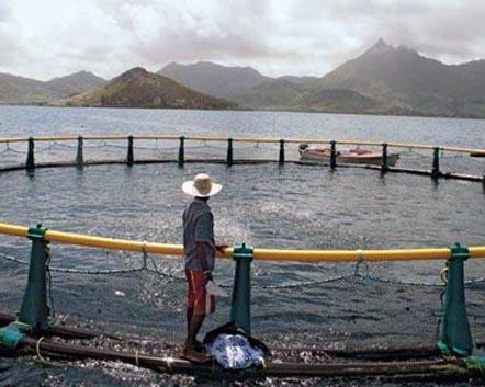 علت استفاده از لوله پلی اتیلن در دریا