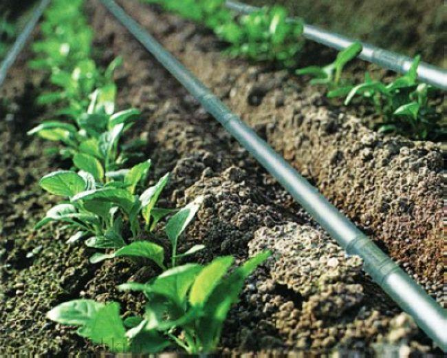 drip-irrigation-systems-1495147